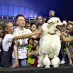Цирк в Таганроге: весёлые пудели, горные львы и бесстрашные каскадёры