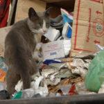 Кто хочет нажиться на мусоре?