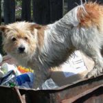 Администрация Таганрога разъяснила должны ли собственники ТКО передавать отходы региональному оператору?