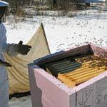 Январь в затерянном мире пчёл