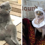 Кошки позируют   и выигрывают