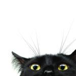 Девять жизней кота Барсика