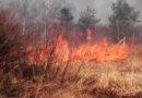 Какое наказание грозит за выжигание травы
