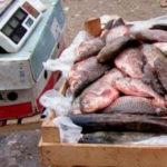В Таганроге выявили незаконную рыбу, икру и раков